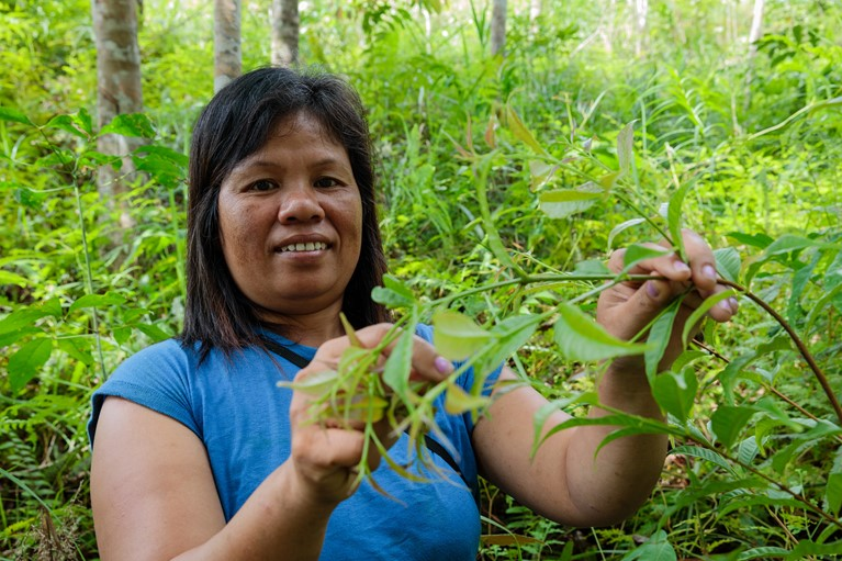 Tatik (38) in part of her communities preserved forest collecting belinjo leaves used for cooking soup in Tembak hamlet, Sintang District, Indonesia, 2018. Photo credit: Richard Wainwright/Caritas Australia.