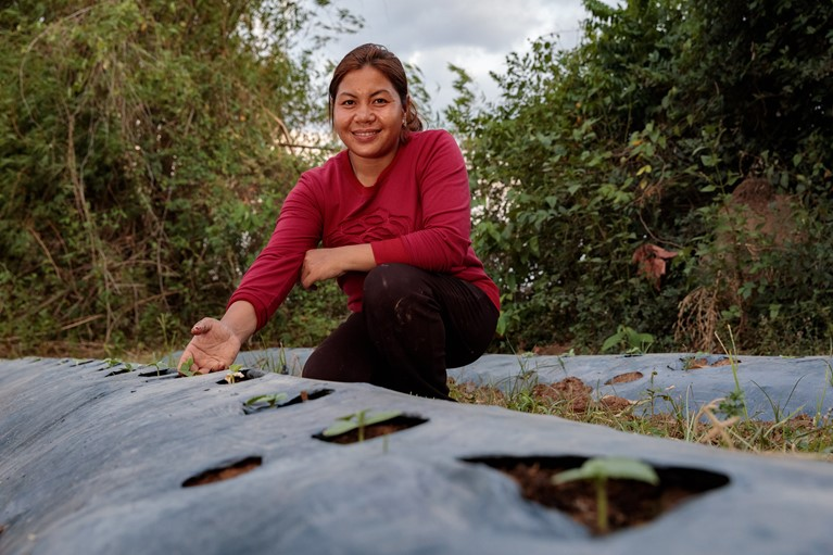 Phany working in one of her gardens with newly planted vegetables at their home in Pursat District, Western Cambodia, 2019. By using the drip irrigation system, plastic covering to keep in moisture and other techniques learnt through the Caritas Australia supported Environmental Protection and Development Organisation (EPDO) project, she can now grow vegetables during the dry hot summer. Photo credit: Richard Wainwright/Caritas Australia.